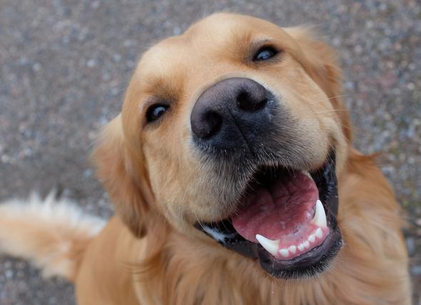 Dog Dental Care - Bad Breath, Teeth Cleaning, Dog Dentist in Orlando, FL