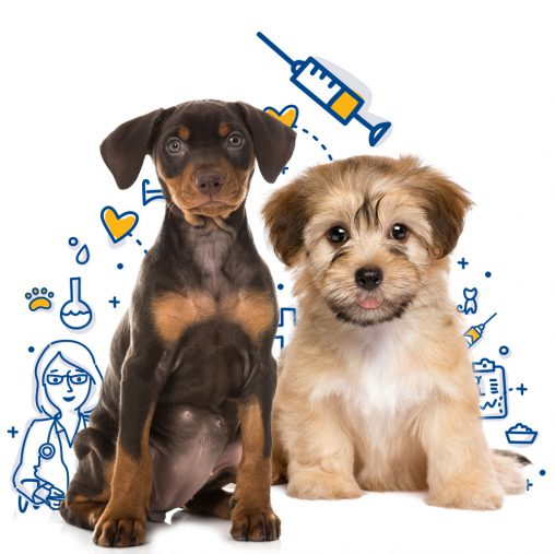 The importance of pet vaccinations in Orlando