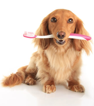 Dog Dentist near me in Orlando, FL