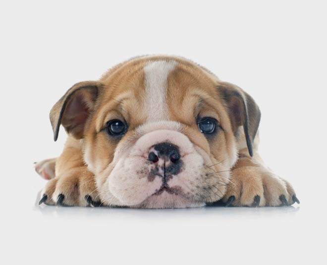 Puppy Pet Care in Orlando, FL