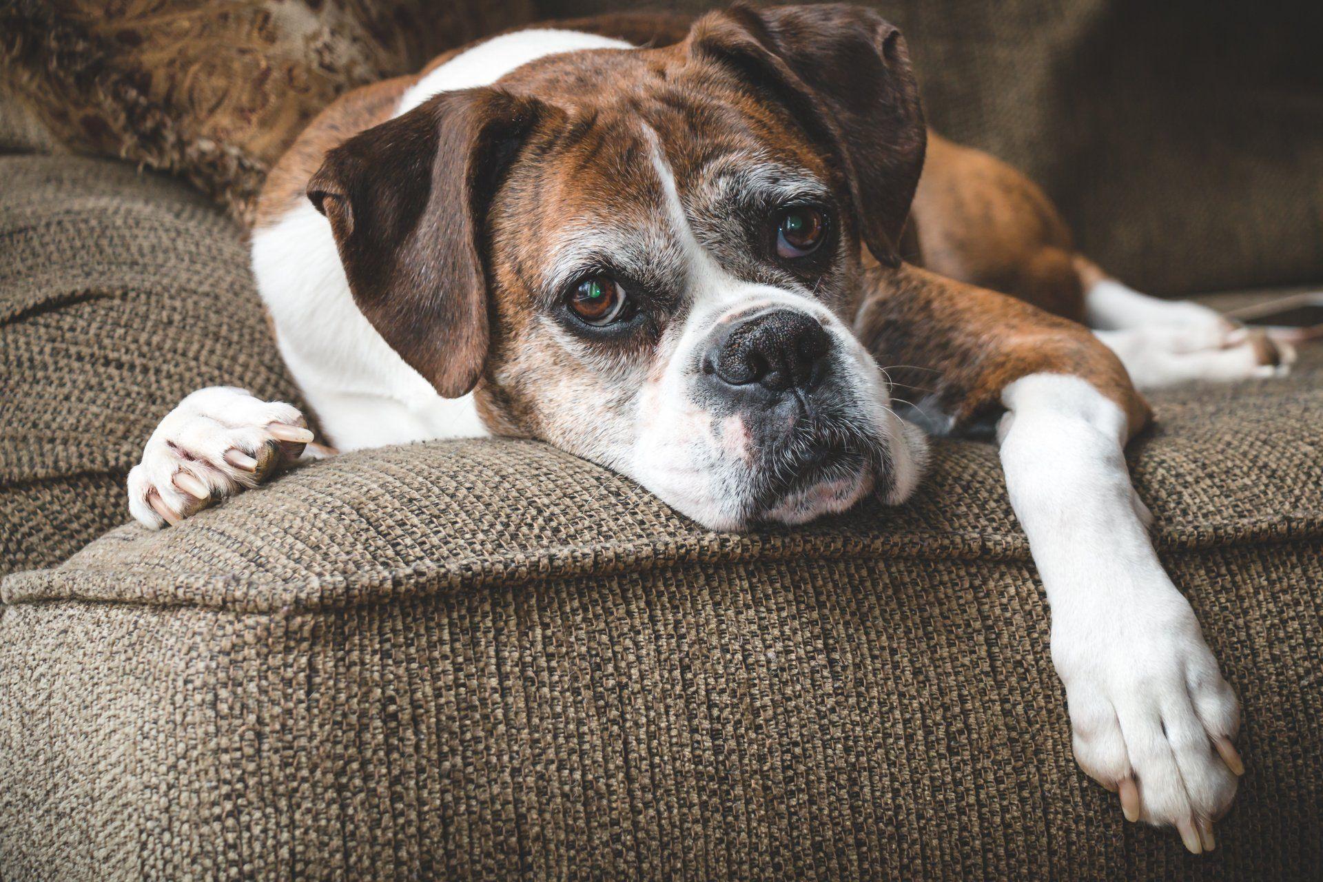 Senior Pet Care in Orlando, FL