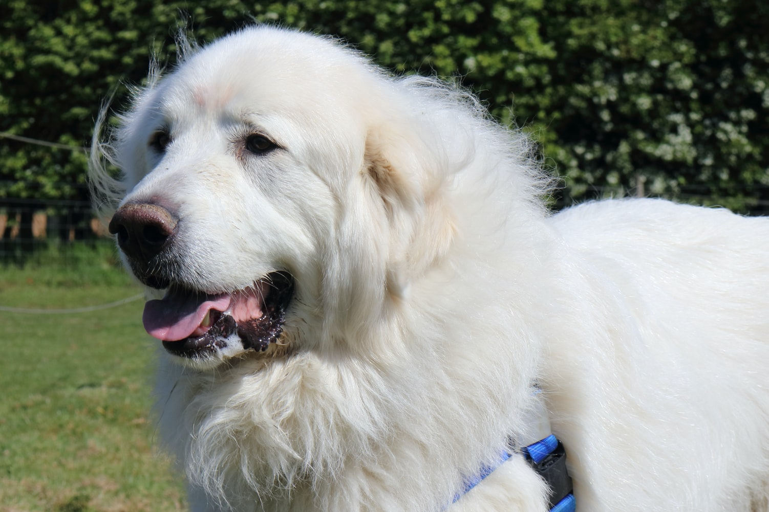 Large Dogs Care in Orlando, FL