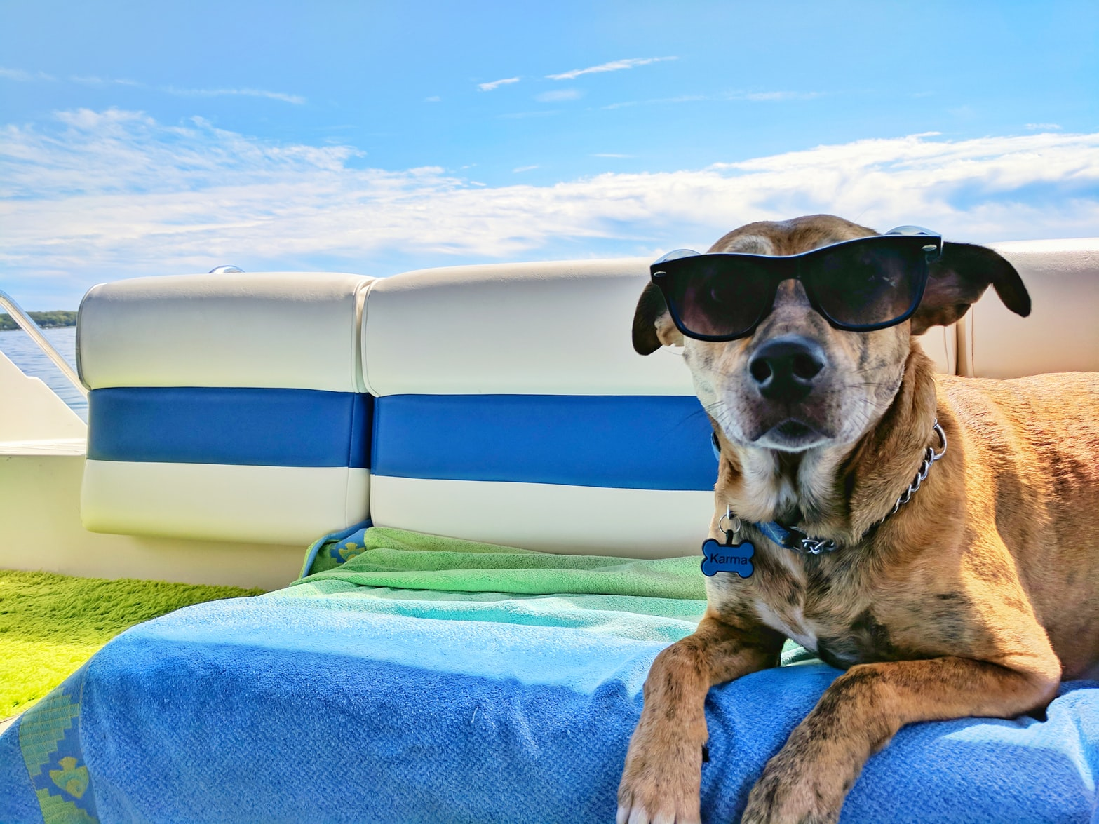 How to take care of your Pets for Summer in Orlando, FL