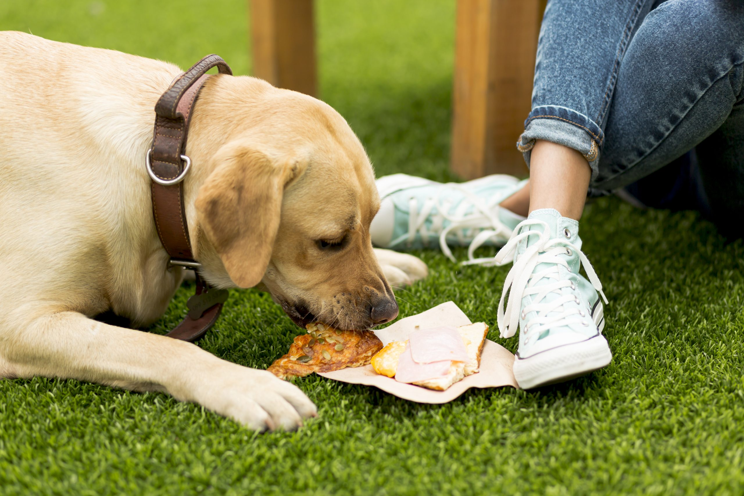 What to do if your Dog eats something they shouldn't in Orlando, FL