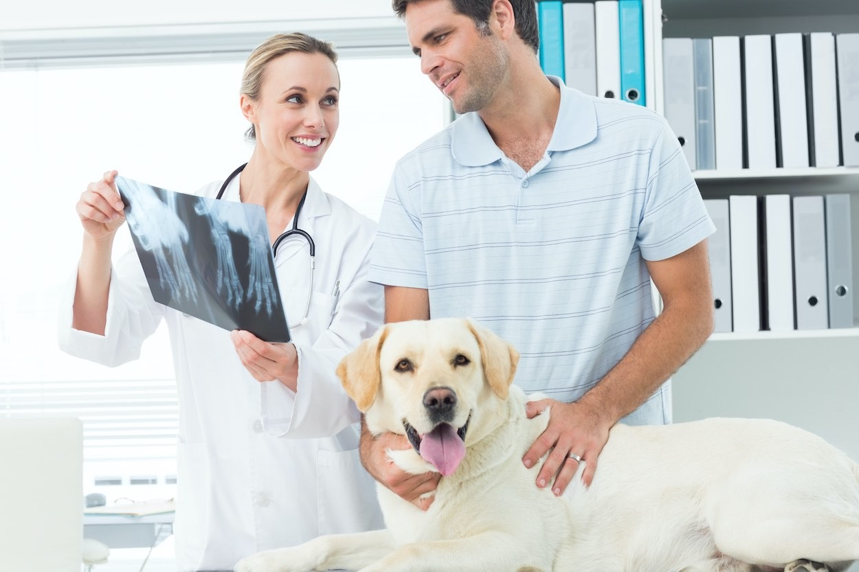 How to prepare your Dog for a Radiograph in  Orlando?