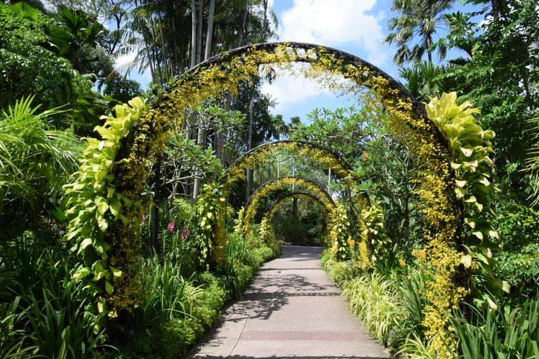 Image result for Singapore botanical garden