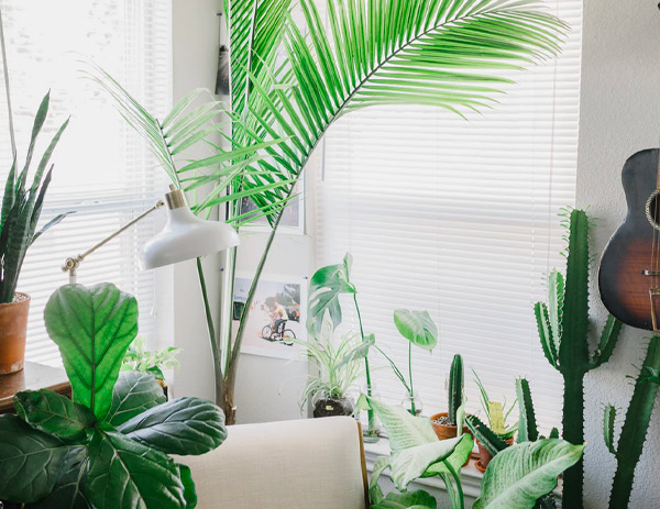 10 Best Bedroom Plants for Cleaner Air and Better Sleep