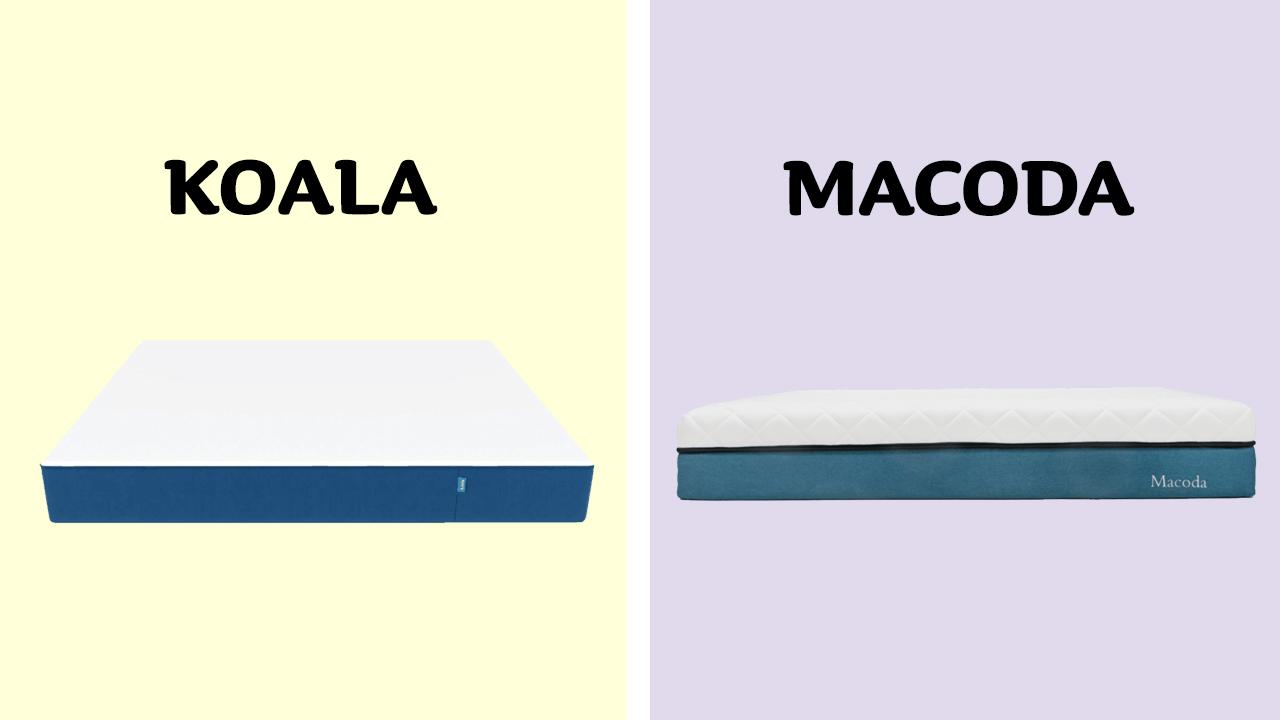 Koala vs Macoda