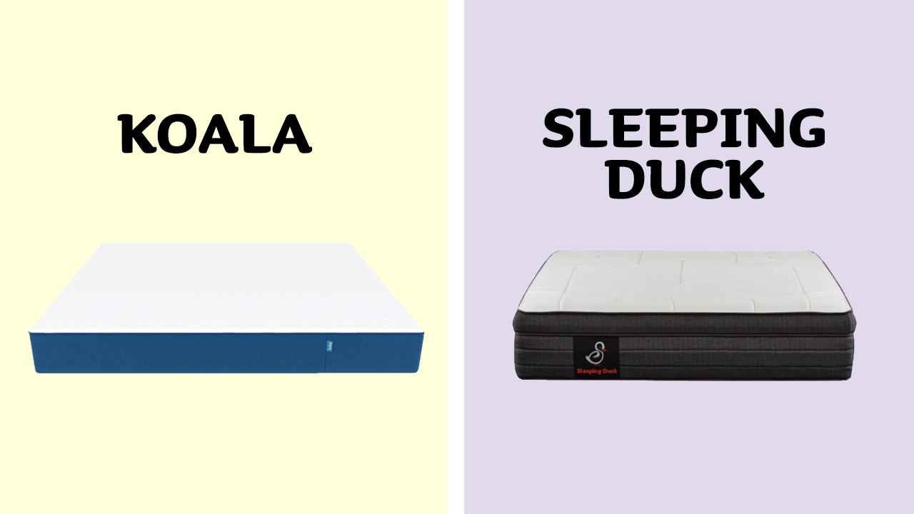 Koala vs Sleeping Duck