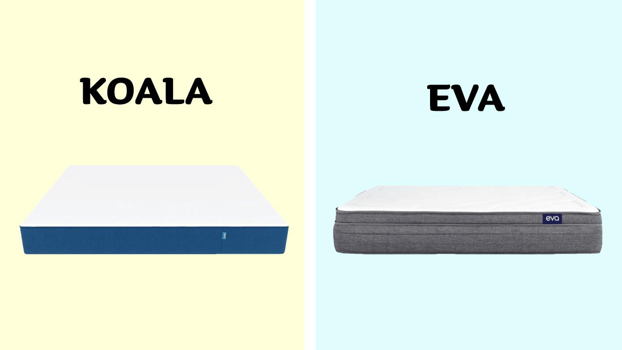 Koala vs Eva
