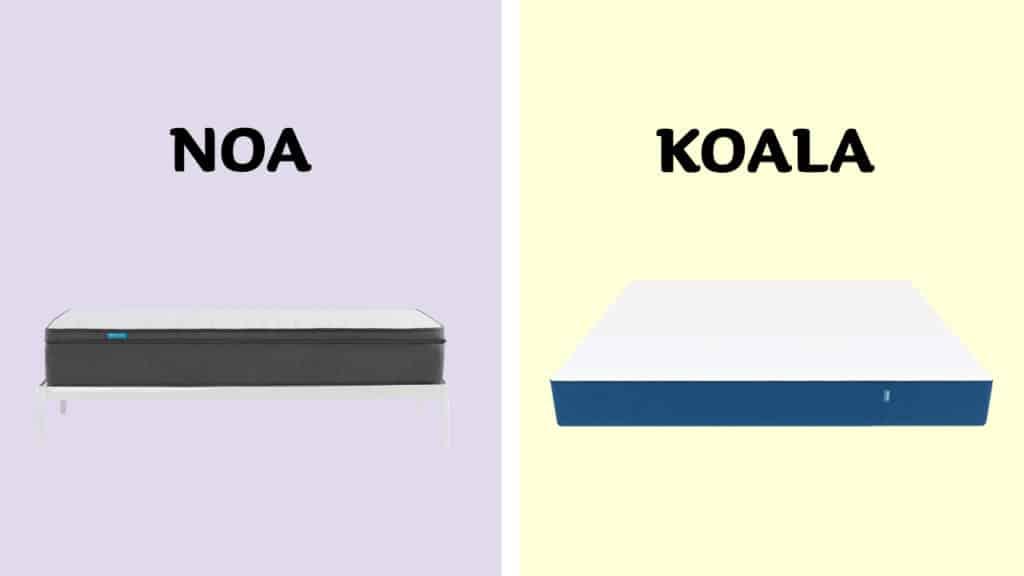 Noa vs Koala