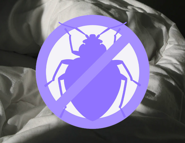 Where To Buy A Bed Bug Mattress Cover