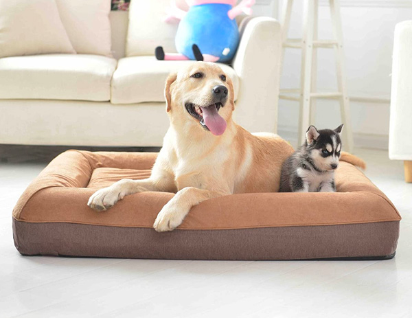 The Best Dog Beds Review