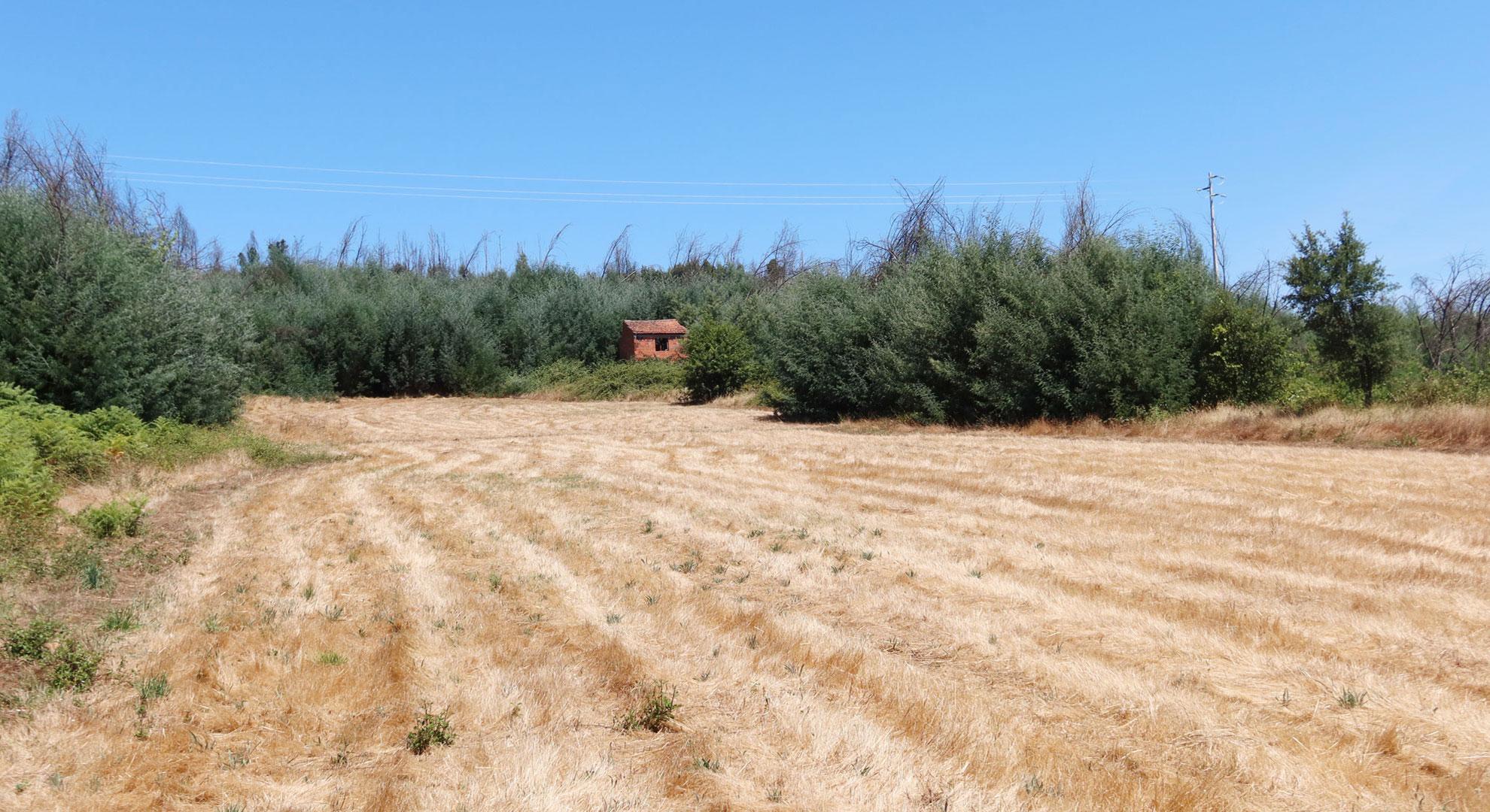 Empty field in Project Kamp