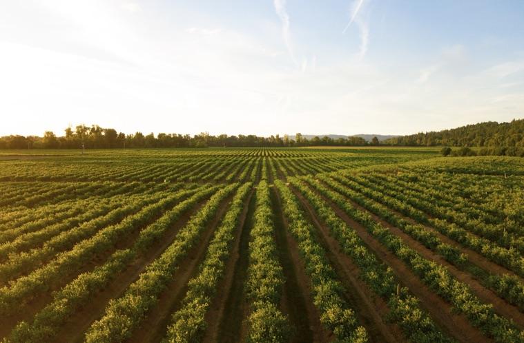 crops growing on farmland
