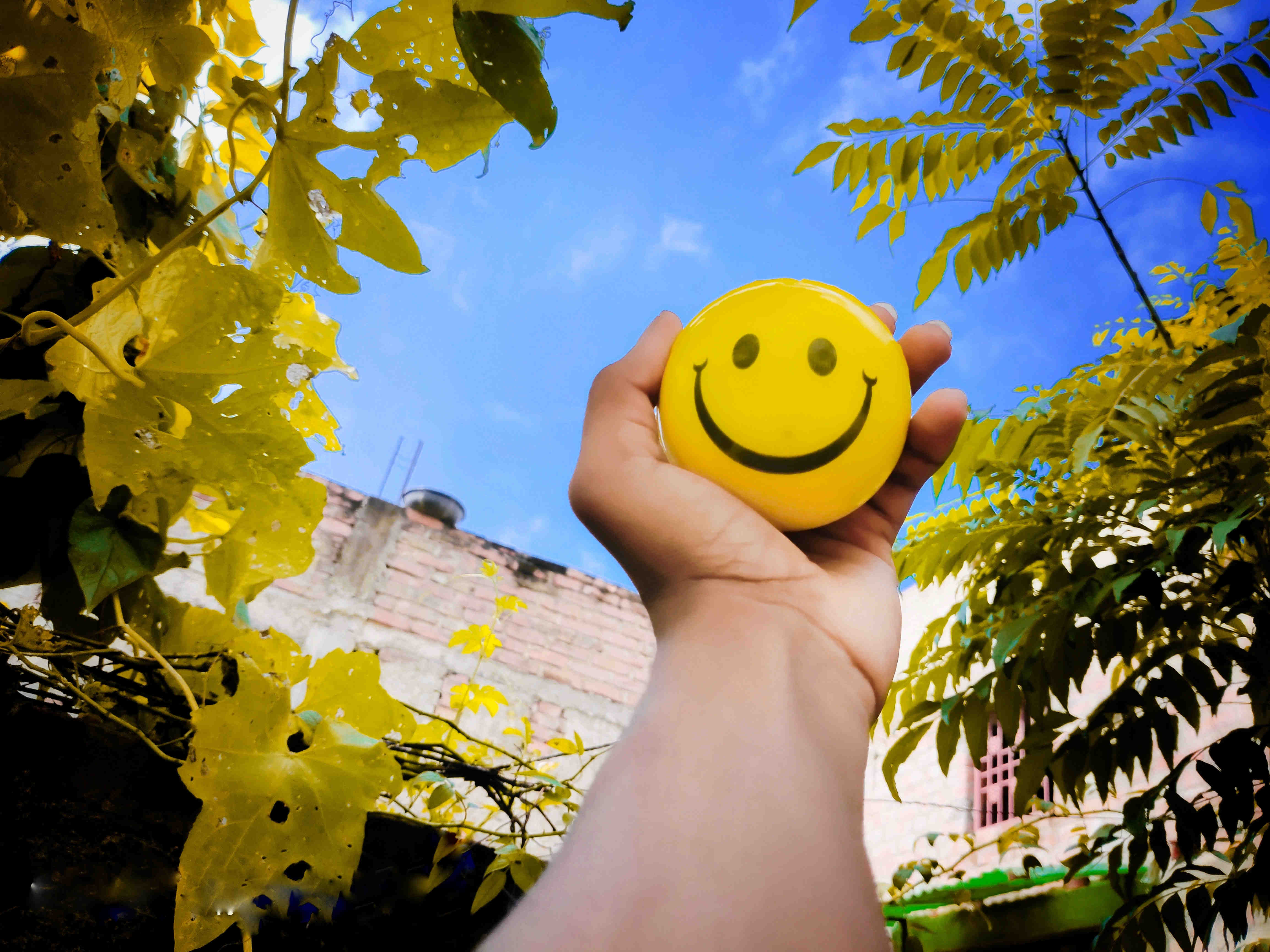 Link Between Happiness & Well-being: The Work of Happiness Scientists in Singapore