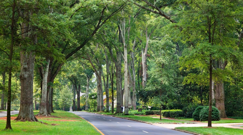 Tree-lined roads.