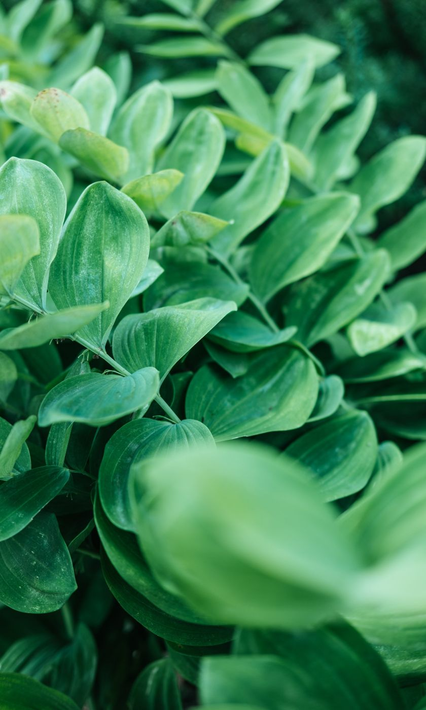 lush green plants