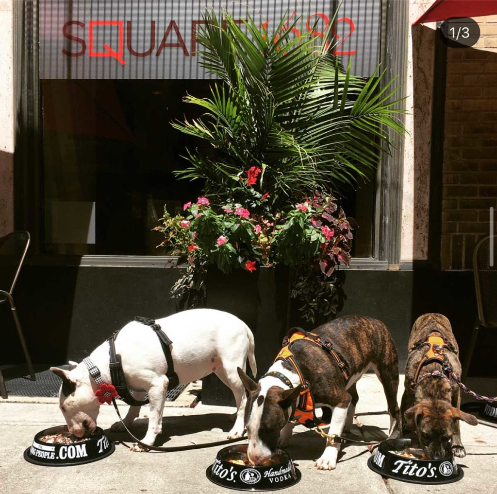 IMG 1262 1024x1016 - Spruce Street Common's Philly Pet Guide