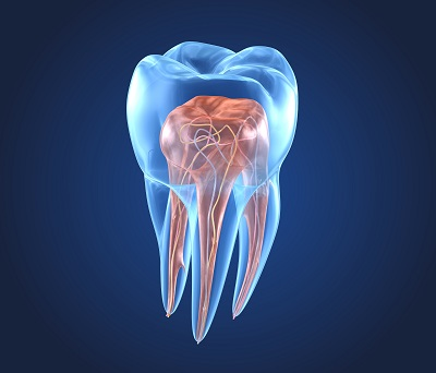 a diagram of a tooth's inside