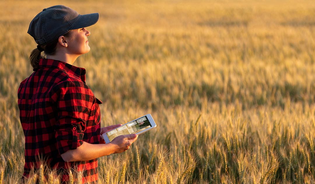 How to Use Wireless Soil Moisture Sensors in Smart Farming – Three-step Process