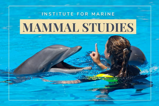 Woman training a dolphin - Institute For Marine Mammal Studies
