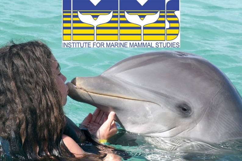 Girl swimming with dolphins - Institute for Marine Mammal Studies