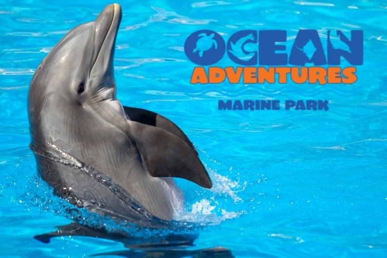 Beach hotels near Ocean Adventures Marine Park | Photo of a dolphin swimming