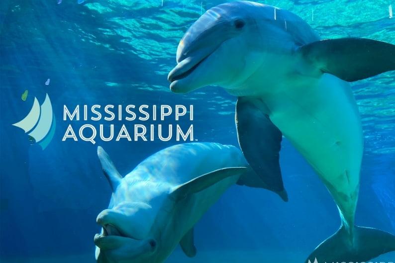 Mississippi Aquarium's Dolphins