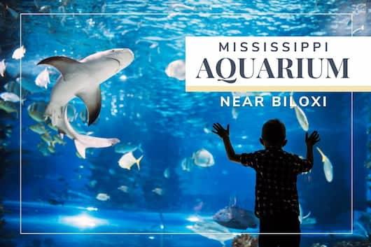 Mississippi Aquarium Near Biloxi - People inside an Aquarium