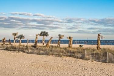 Palms at Pass Christian Beach