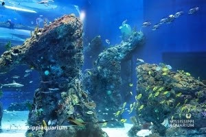 Fish tanks with corals