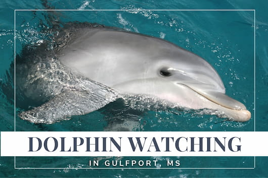 Dolphin Watching in Gulfport, MS - Close up of a dolphin