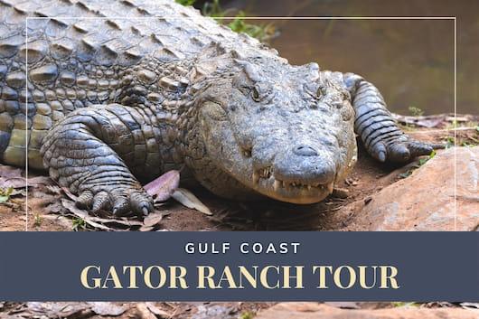 Gulf Coast Gator Ranch Tour - Alligator closeup shot