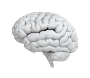 White Colored Brain