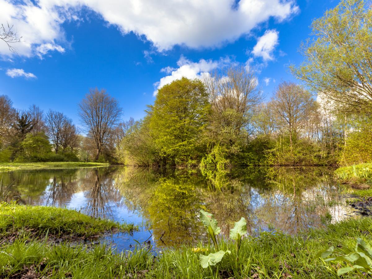 Príroda. Stromy a jazero.