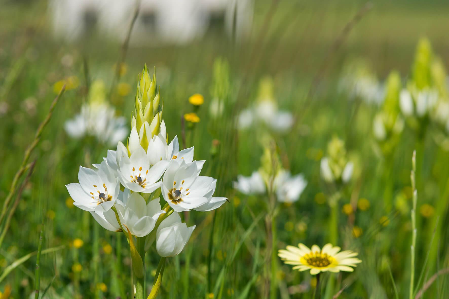 Cape Flower Season