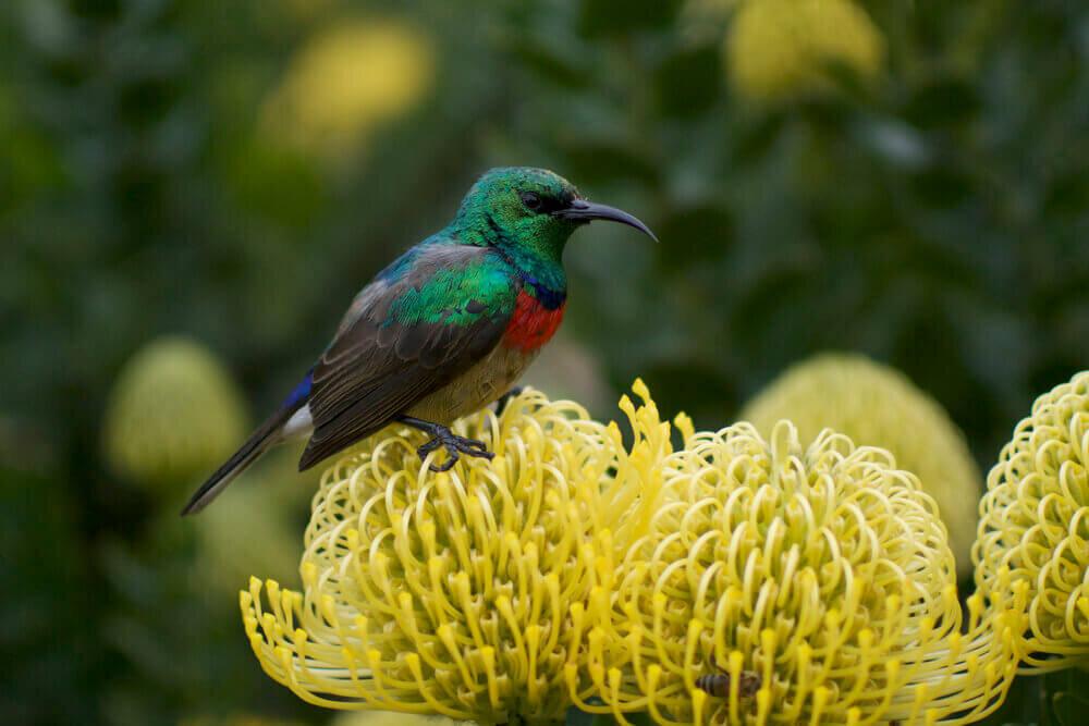Kirstenbosch+National+Botanical+Garden+-+The+Last+Word.jpg