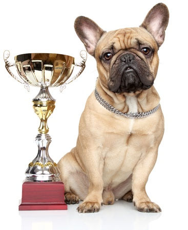 Dog With Championship Cup