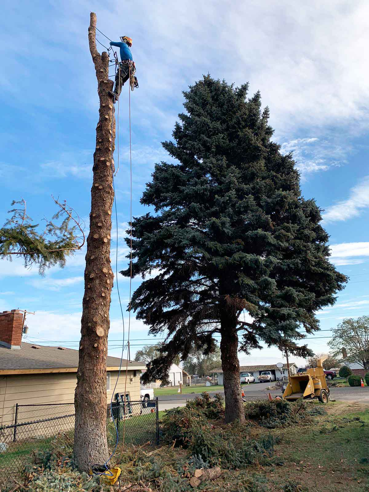 Tree Removal, Thinning & Pruning