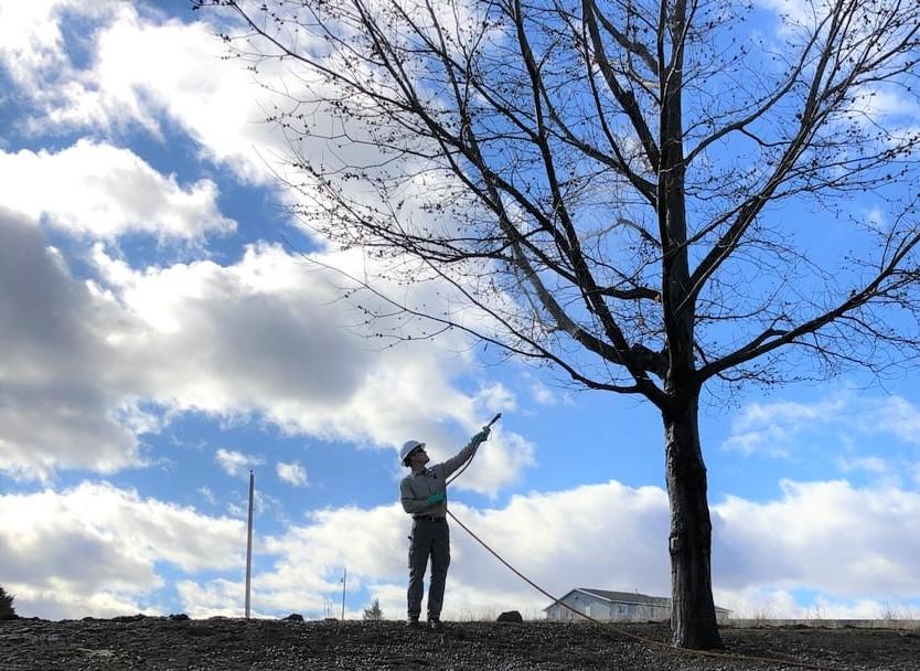 Tree & Shrub Pest Control