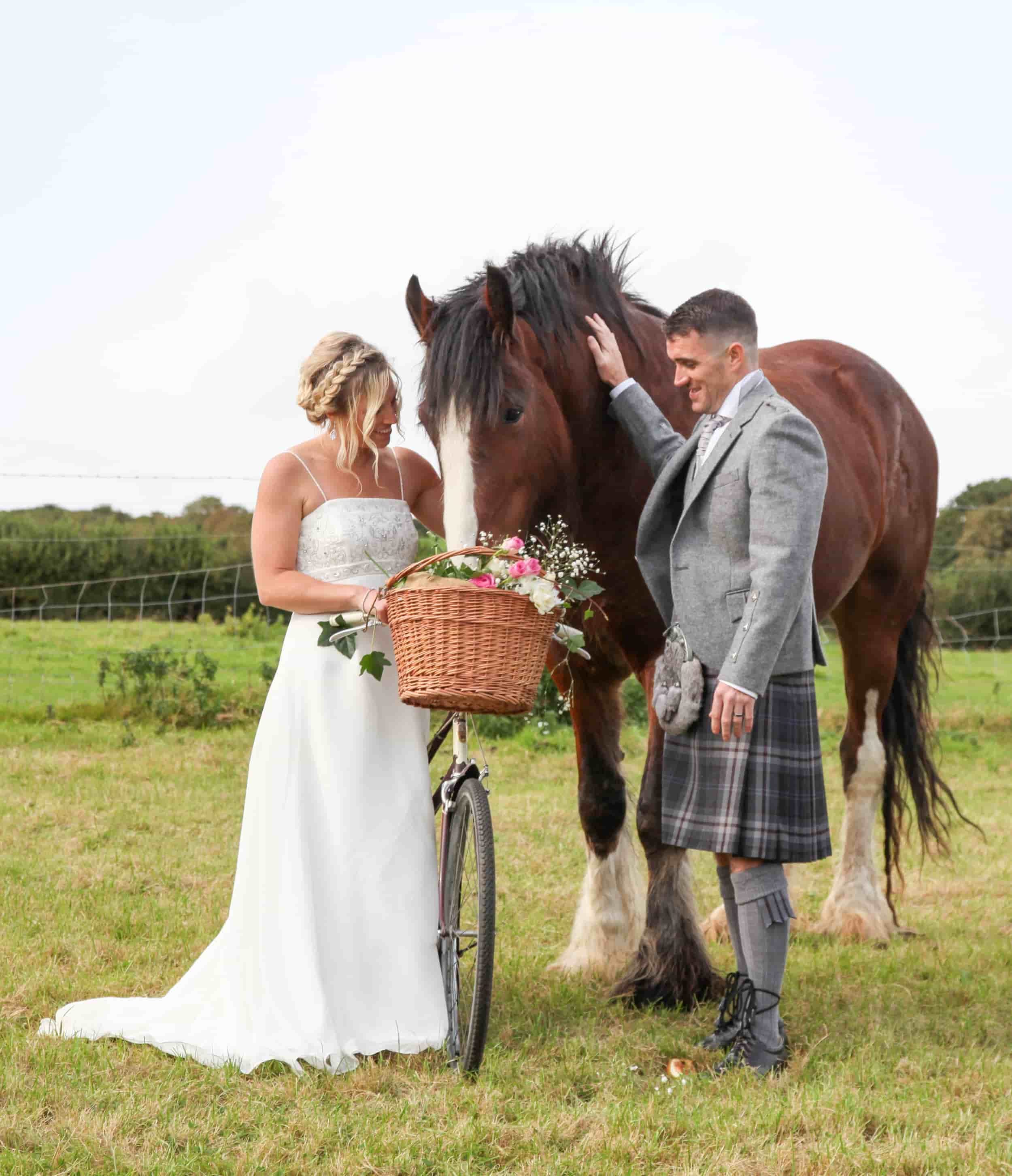 bride and groom with a shire horse at blackwater farm in cornwall