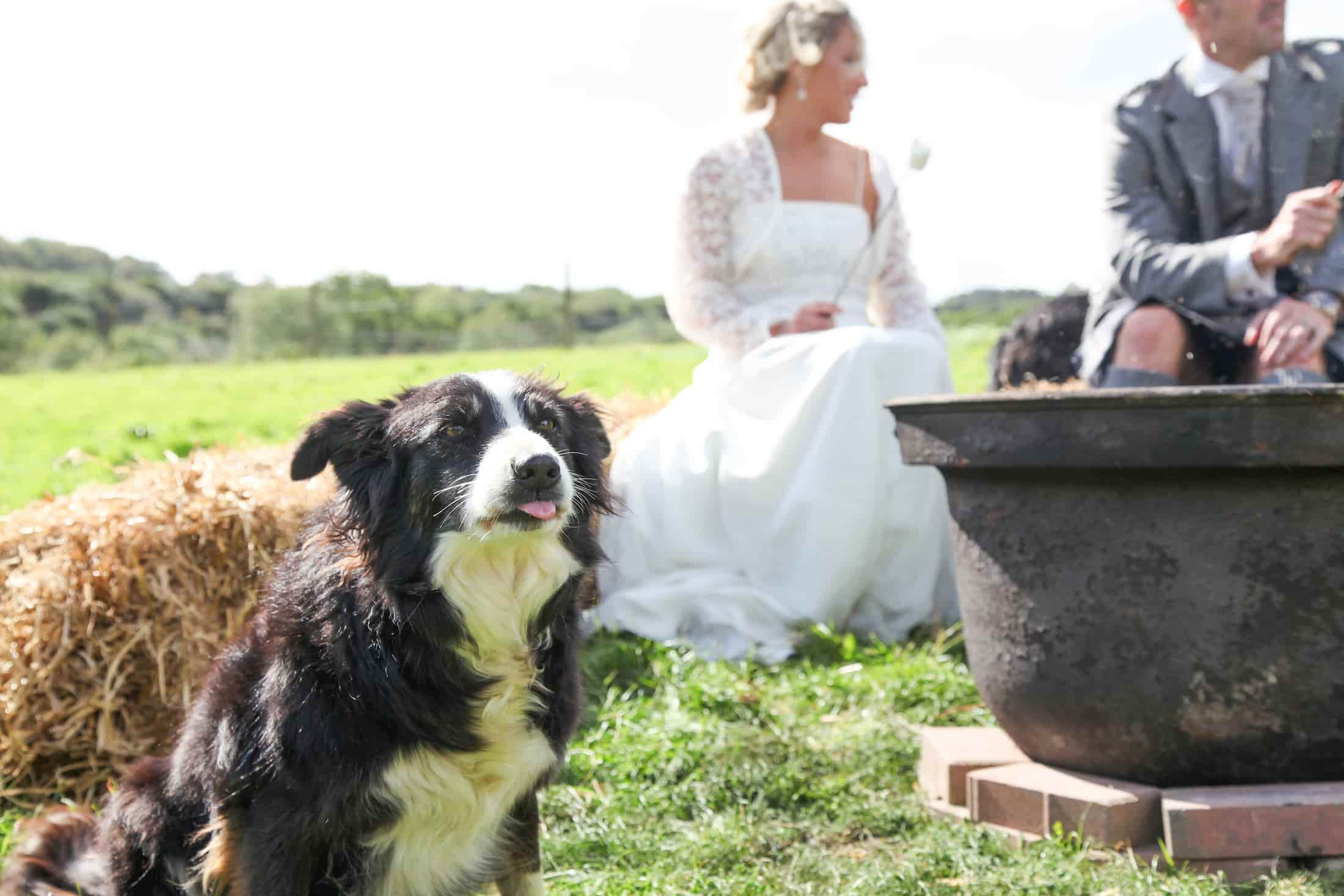 dog and bride cornwall wedding