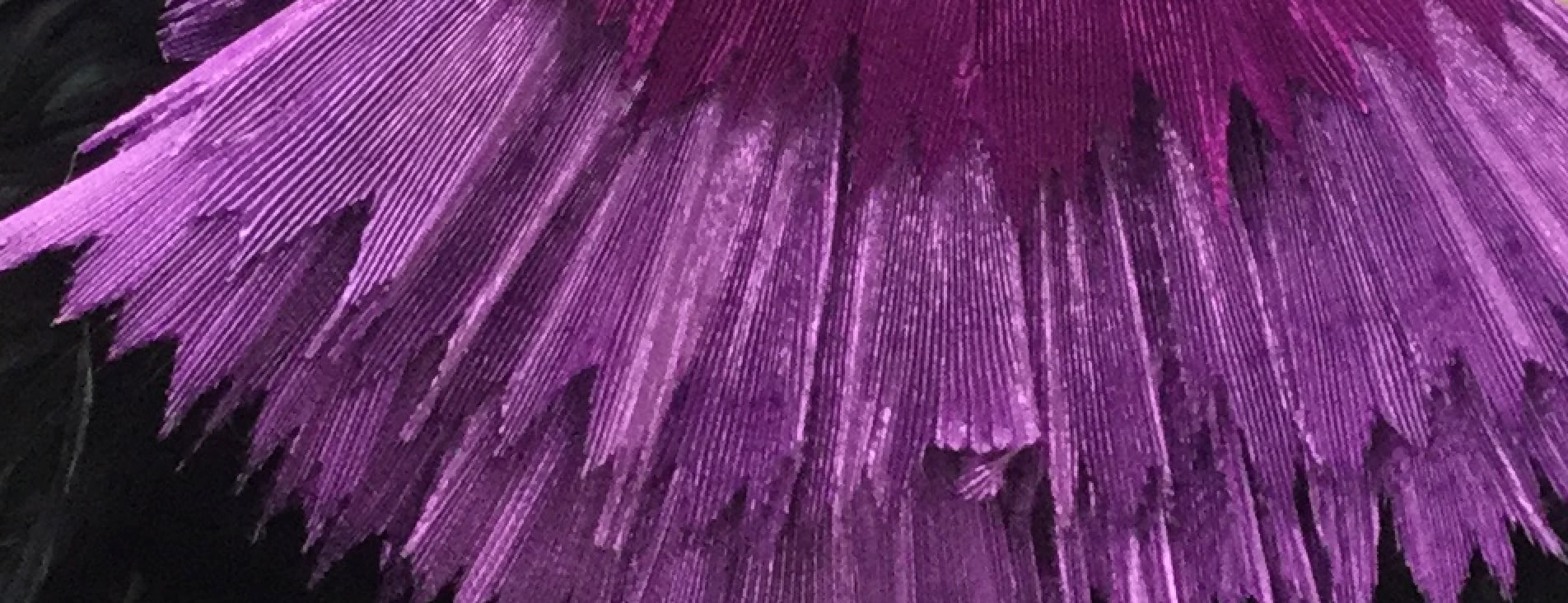 Cher purple fabric header image