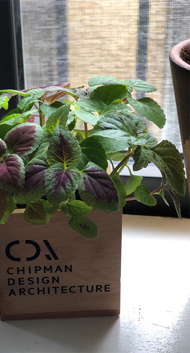 A plant in a Chipman Design Architecture crate