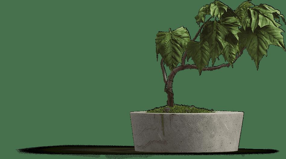 EVI Bewind & financieel support
