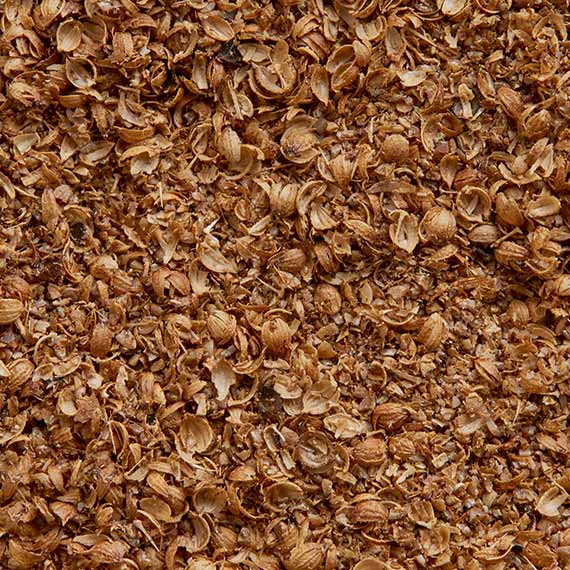 Coriander close-up from SOS Foods