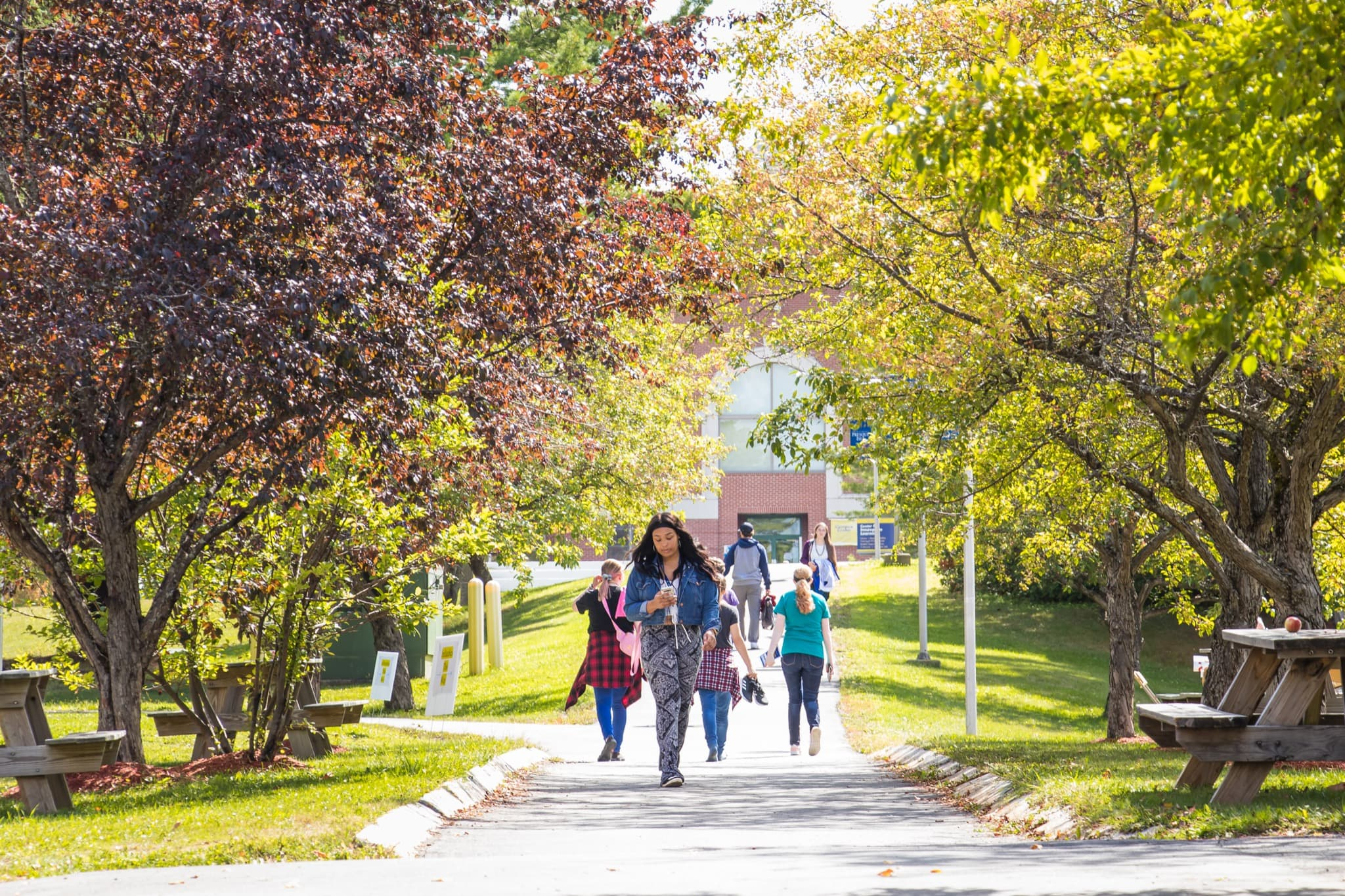 Student walking under tree lined walkway of university