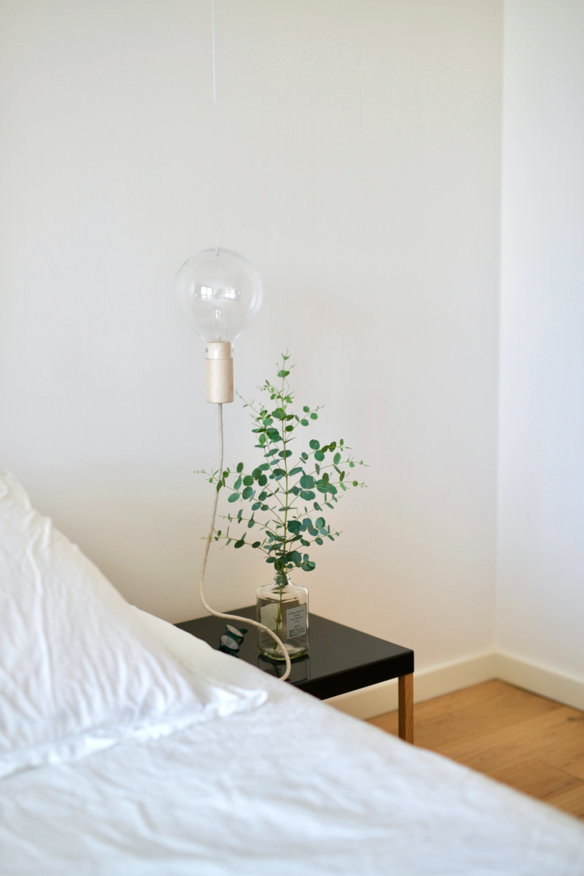 healthy houseplant
