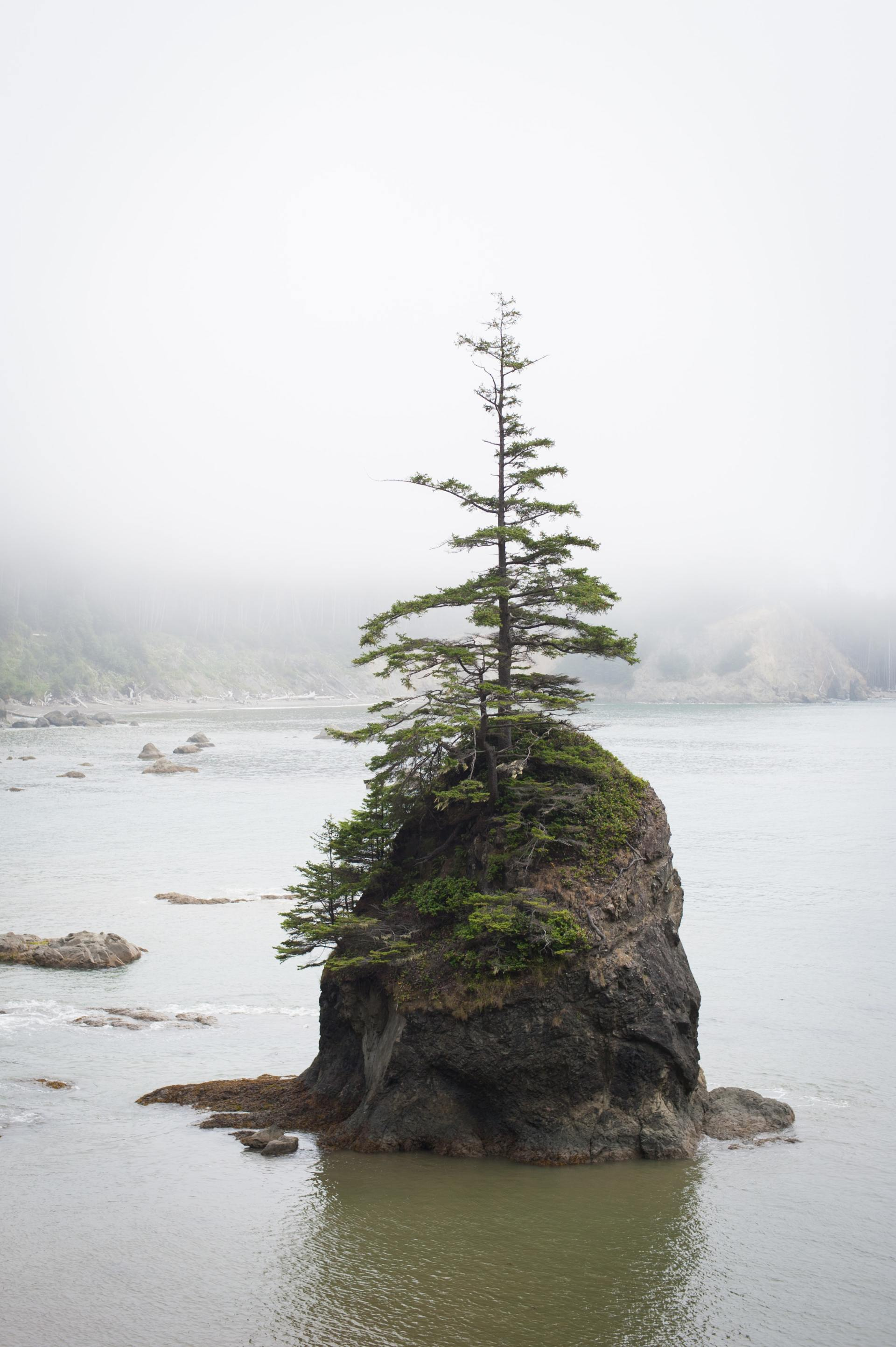 Single tree growing into boulder surrounded by water